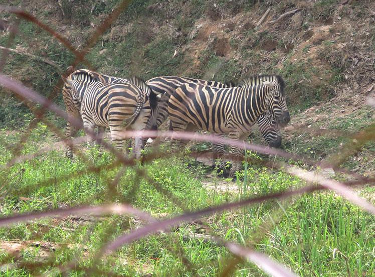 Zoo Negara Malaysia